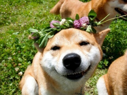 Dog Flower Pictures