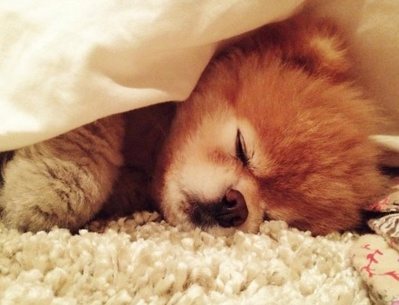 Quotes For Dogs Sleeping